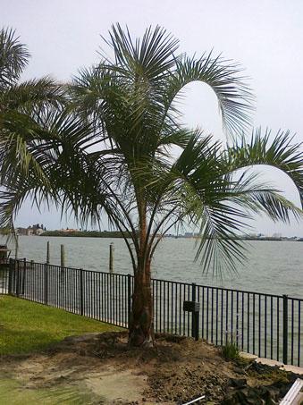 Palm Florida State University