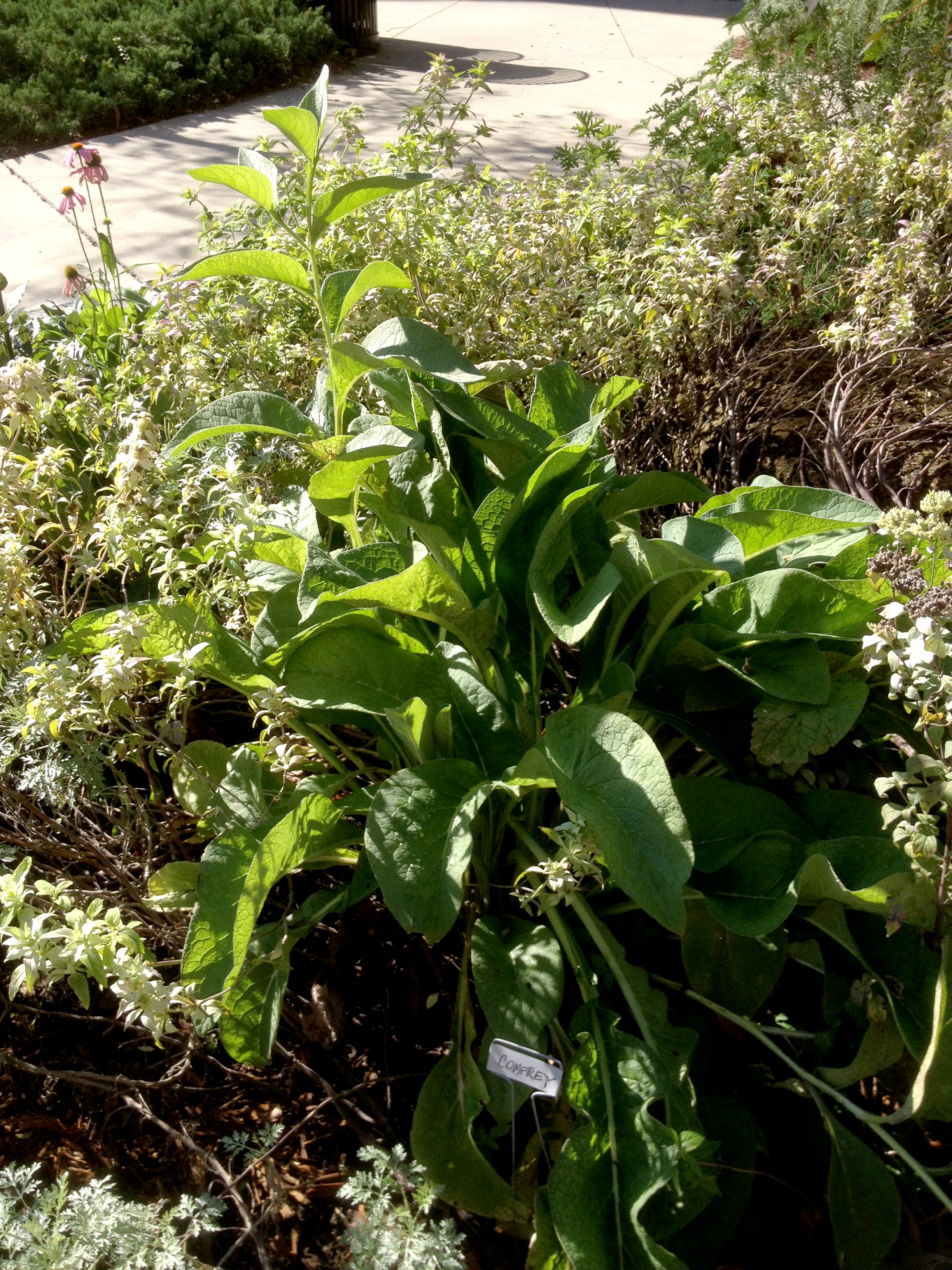 medicinal herb garden florida state university