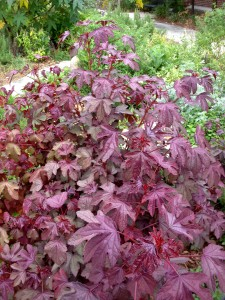 Cranberry-Hibiscus